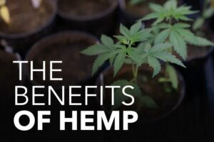All about Hemp Oil