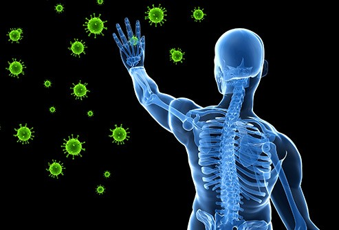 Facts about the Immune System