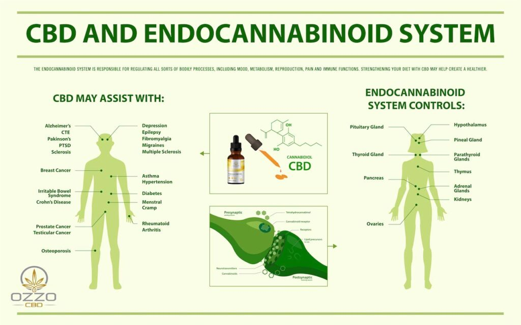expalining the endocannabinoid system